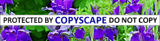 Copyright- Holistic Wisdom: Do Not Copy This Article